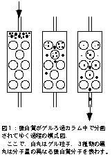ゲルろ過クロマトグラフィー(ク...